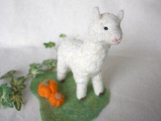 羊毛フェルト アルパカとカボチャの画像