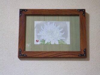 絵手紙 菊の画像