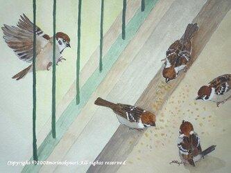 【sale】スズメたちのアクリル画の画像