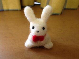 リボンウサギの画像