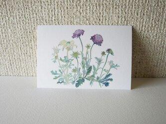 ポストカード 花紫白 10枚組の画像