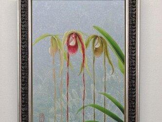 日本画 「フラグミペディウム カウダツム」の画像