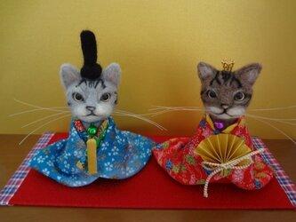 猫雛様(アメショー)の画像