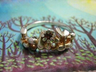 ダグリグダグの種 gold shade ver.の画像