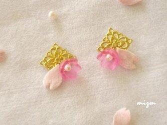 桜サクの画像