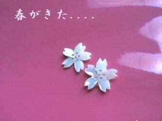 永遠に咲きつづける・SAKURA~さくら~の画像