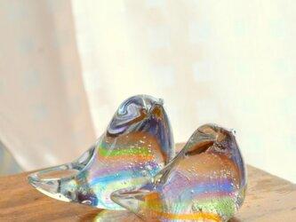 虹色の小鳥ペアの画像