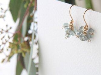 aqua earringsの画像