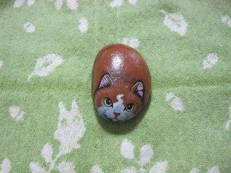 石猫  「地縛猫」の画像