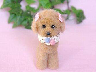 子犬 プードルちゃん 癒しのお顔の画像