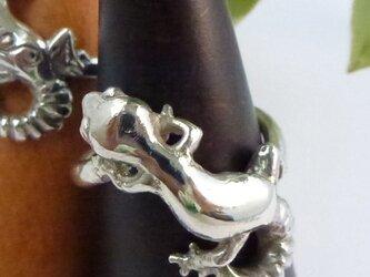 ヒョウモントカゲモドキの指輪 模様なしの画像