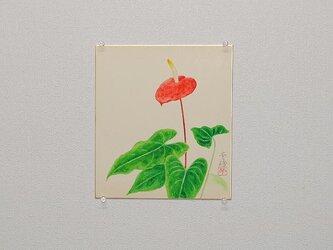 日本画色紙 「アンスリウム」の画像