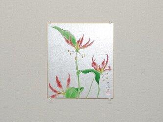 日本画色紙 「グロリオーサ」の画像