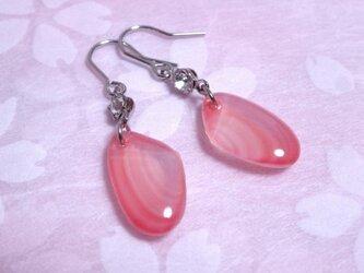 【再販】桜貝のピアス・濃いピンク(小)の画像
