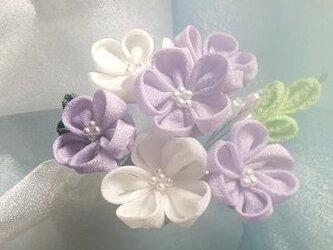 ⑪プチかんざし(白紫)の画像