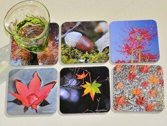 写真コースター♪秋コレクションの画像