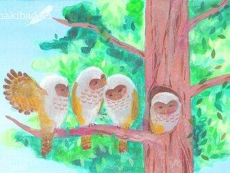 4羽の梟《アクリル原画キャンバスsizeSM》の画像