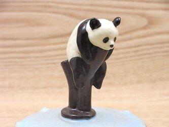 水青樹上爆睡大熊猫耳付飴小壺−Bの画像