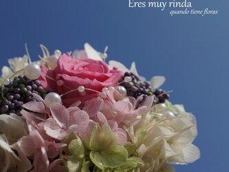 La rosa de jovencita(2点以上送料無料)の画像