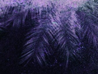 SHANGRI-LA 椰子の画像