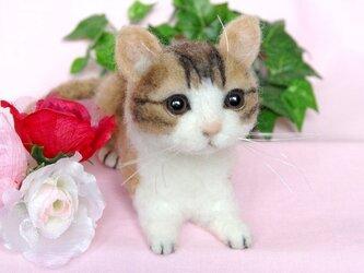 可愛い子猫ちゃんの画像
