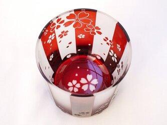紅白桜花の画像