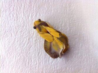 和色の金魚 ブローチの画像