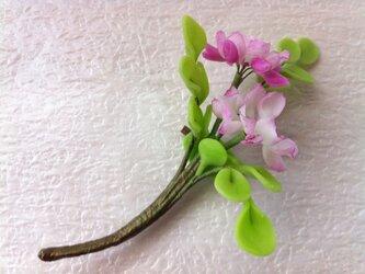 れんげ草のコサージュの画像
