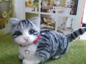 羊毛子猫の画像