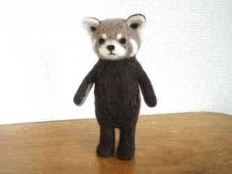 レッサーパンダさんの画像