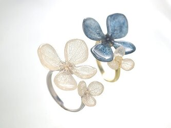 アジサイ ふたつの花弁のオープンリングの画像