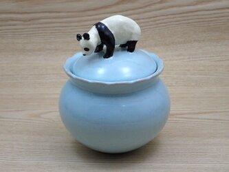 Panda Candy Box-Gの画像