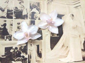 結婚式やバカンスに!本物の胡蝶蘭のピアス!の画像