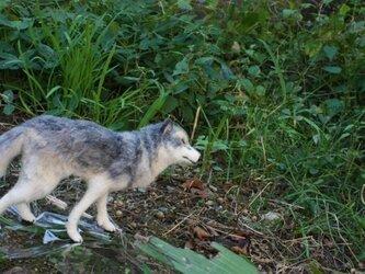 羊毛フェルト オオカミの画像