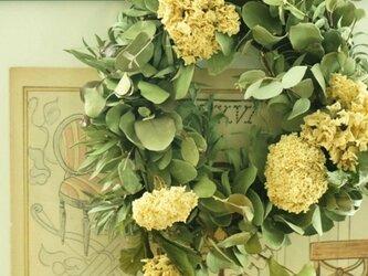 ユーカリ 大テマリ wreathの画像