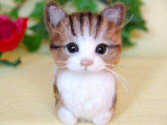 【香箱座り】 まったり猫ちゃん 2の画像