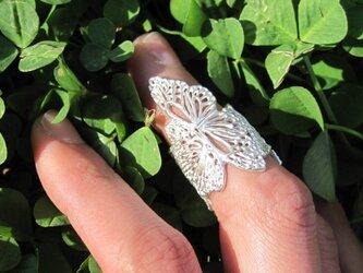蝶リングの画像