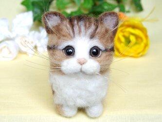 【香箱座り】 まったり子猫ちゃんの画像