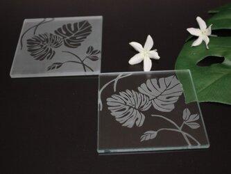 モンステラ ガラス コースターの画像