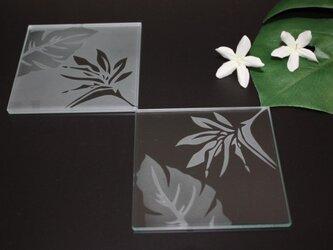 バード オブ パラダイスのガラス コースターの画像