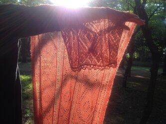 太陽と風をまとうマーガレットの画像