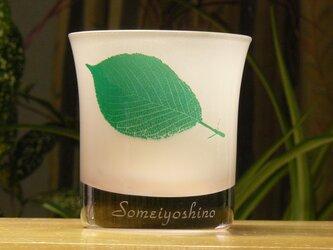 葉っぱロックグラス ソメイヨシノ(1個)の画像