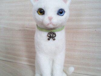 白猫 (オッドアイ)の画像