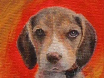 猫の肖像・犬の肖像カラーの画像
