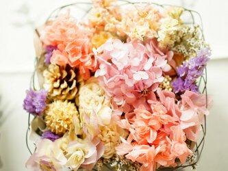 春色 arrangementの画像
