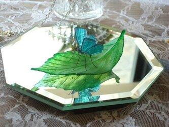 ガラスの蝶 ルーミスシジミ on リーフの画像