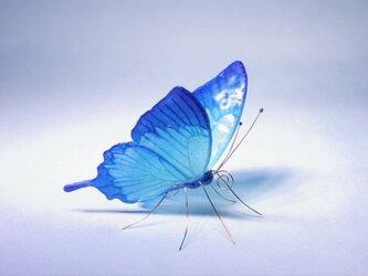 《再販》ガラスの蝶 ハッピーブルーユリシスの画像