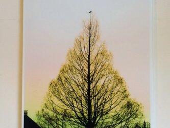 『木と鳥と』 うぐいす A4パネルの画像