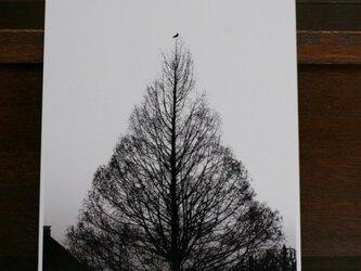 『木と鳥と』 白黒 A4パネルの画像
