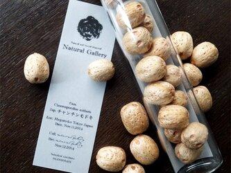 "Seed mania bottle ""Lapsi fruit""の画像"